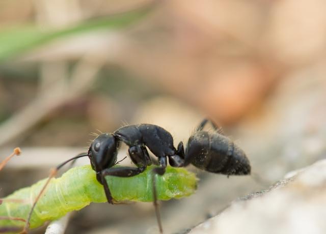 フィリピンのアリから身を守るために有効な駆除方法を実証してみた
